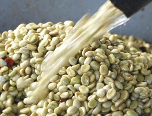 Coffee Processing 3